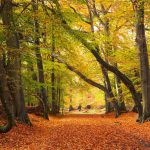 Metal – the Element of Autumn