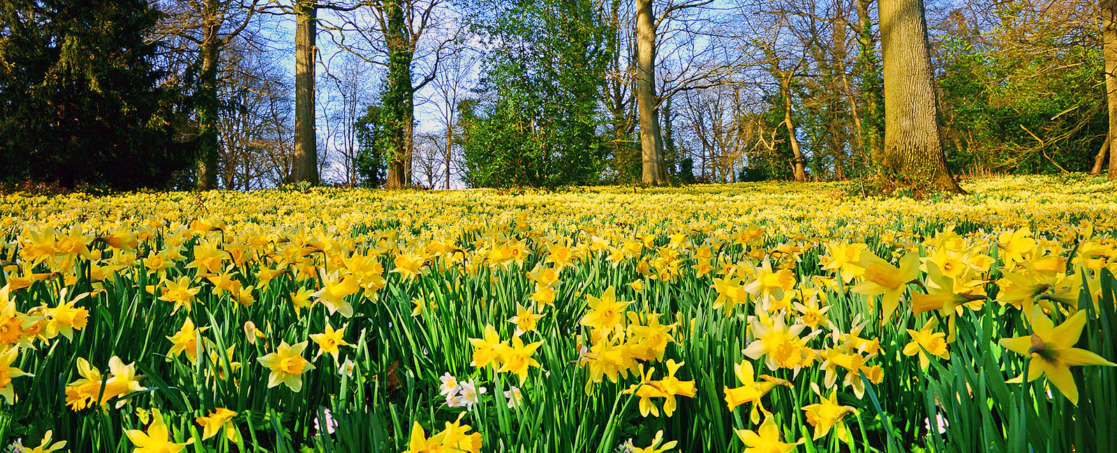 Southwell Acupuncture Celebrates Spring