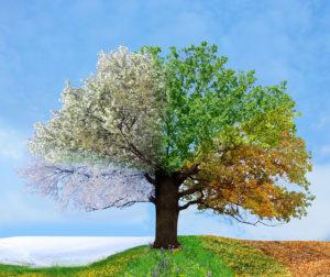 Seasons-Tree Southwell Acupuncture