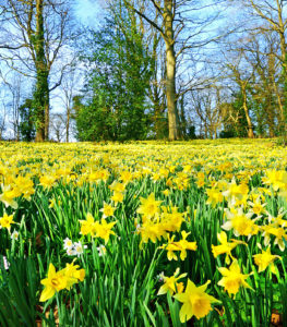 spring-wood-element