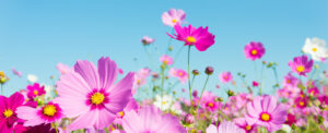Acupuncture and Hayfever at Southwell Acupuncture