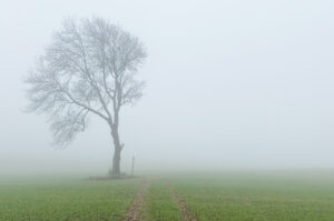 Southwell Acupuncture Blog - See through Your Fog
