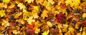 Autumn-Southwell-Acupuncture-Clinic